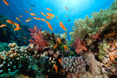 Océano, coral y pescados foto de archivo libre de regalías