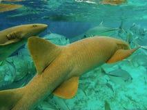 Océano del calafate de Caye en Belice foto de archivo libre de regalías