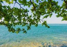 Océano del mar tranquilo con el árbol Fotografía de archivo libre de regalías
