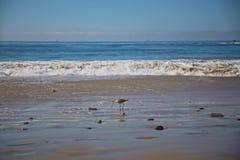 Océano del pájaro de la lavandera Imagen de archivo libre de regalías