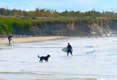 Océano del perro de la tabla hawaiana de la persona que practica surf de la mujer Fotografía de archivo libre de regalías