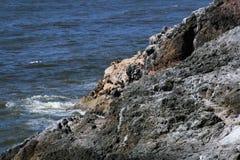 Océano en costa oeste Fotografía de archivo libre de regalías