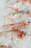 Océano fresco Imágenes de archivo libres de regalías