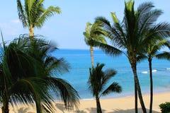 Océano Hawaii de las palmeras Foto de archivo libre de regalías