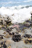 Océano Pacífico Imagenes de archivo
