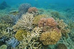 Océano Pacífico subacuático de los corales coloridos foto de archivo libre de regalías