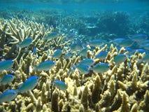 Océano Pacífico, vida del filón Imagen de archivo libre de regalías