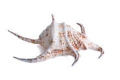 Océano Shell Foto de archivo