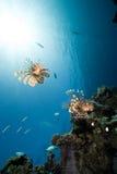 Océano, sol y pescados foto de archivo