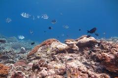 Océano tropical hermoso Fotografía de archivo libre de regalías