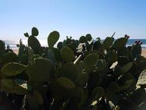 Océano verde de la playa del cactus Fotografía de archivo