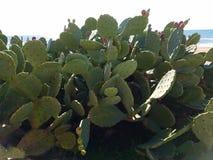 Océano verde de la playa del cactus Imagenes de archivo