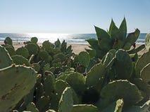 Océano verde 4k de la playa del cactus Imagen de archivo libre de regalías