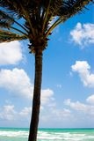 Océano y palma Imagen de archivo libre de regalías