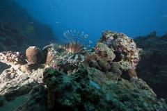Océano y pescados Foto de archivo