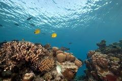 Océano y pescados imagen de archivo libre de regalías