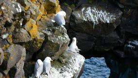 Oc?an de mer de nid de mouette d'oiseau banque de vidéos