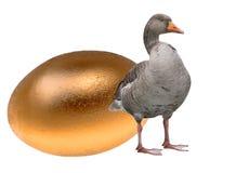 Oca con un uovo dorato Fotografia Stock Libera da Diritti