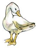 Oca isolata su bianco Illustrazione Vettoriale