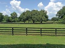 Ocala Florida Royalty Free Stock Photography