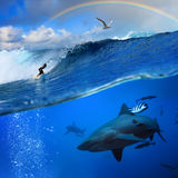 Océan avec l'onde et le requin de rupture d'arc-en-ciel de surfer Photos libres de droits