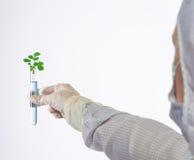 Ocasión del tubo para las plantas Foto de archivo libre de regalías