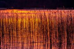 Ocaso al lago Imagenes de archivo