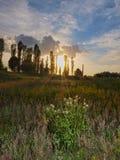 Ocaso y arbusto Baskground para el decktop Imagen de archivo libre de regalías