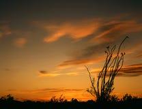 Ocatillo Sunset. Sunset on desert stock photos