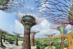 OCBC Skyway and super trees at Gardens by the Bay Stock Photos