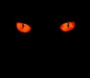 Occhi animali nel nero Immagini Stock Libere da Diritti