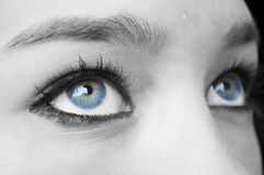 Occhi azzurri femminili fotografia stock