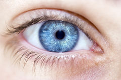 Occhi azzurri perspicaci di sguardo Immagine Stock Libera da Diritti
