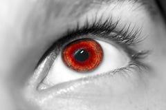 Occhi azzurri perspicaci di sguardo Immagini Stock