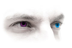Occhi Blu-Rosso magenta Fotografia Stock