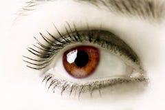 Occhi del Brown Fotografia Stock Libera da Diritti