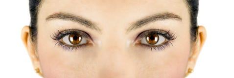 Occhi del Brown fotografie stock