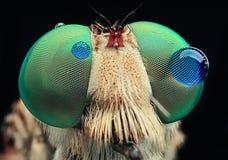 Occhi del dettaglio della goccia di acqua di Robberdly immagine stock