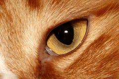 Occhi del gatto. Fotografia Stock