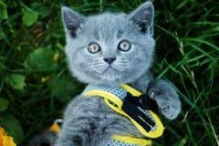 Occhi del ` s del grande gatto Fotografia Stock