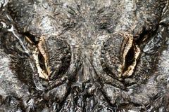 Occhi dell'alligatore Fotografie Stock Libere da Diritti