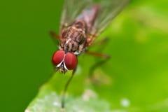 Occhi dell'insetto Fotografia Stock