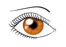 Occhi della castagna Fotografie Stock Libere da Diritti