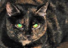 Occhi di gatti verdi Fotografia Stock Libera da Diritti
