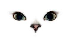 Occhi di gatto Fotografie Stock
