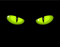 Occhi di gatto selvaggi verdi Immagine Stock