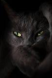 Occhi di gatto spettrali del diavolo Immagini Stock