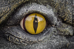 Occhi di giallo dei coccodrilli Immagine Stock Libera da Diritti