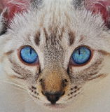 Occhi di innocenza fotografie stock libere da diritti
