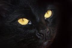 Occhi di un gatto nero Fotografie Stock Libere da Diritti